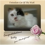 Global community of cat lovers rally on UnitedCats to reunite stray moggy